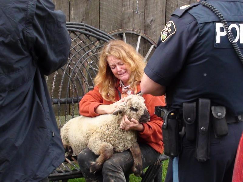 CFIA vs healthy lamb
